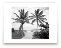 Coconut gate