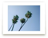 Palm Lean by Alexandra Nazari