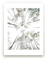 Aspens at Altitude Wall Art Prints