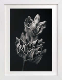 Wild Sage in Black & White I Domino Non-custom Art Print