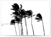 Palm Trees in the Wind by BeachPaperCo