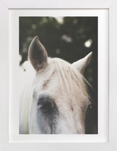 Quiet Pony Art Print