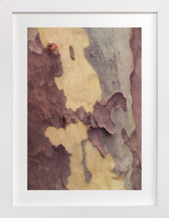 A Tree Reveals Itself Art Print