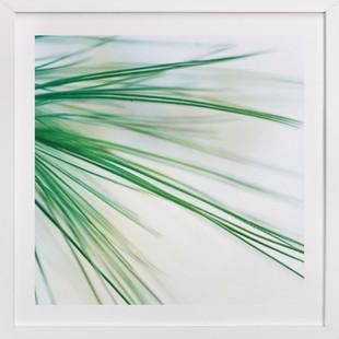 Pine Study 1 Art Print