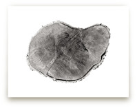 Tree Rings pt. 1 Art Prints