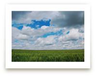 Fields of Grain