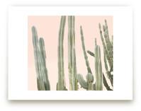 Peachy Cactus Print by Wilder California