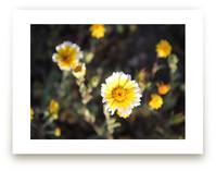 Yellow Wild Flowers by PHEP Design