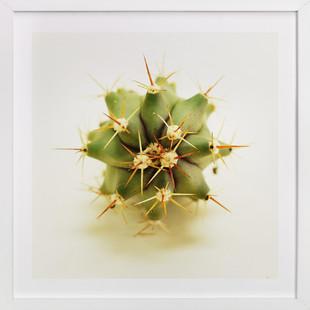 Fero Cactus Art Print