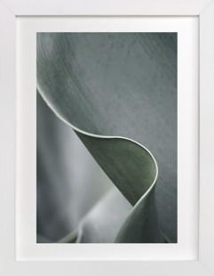 Botanic 3 Art Print