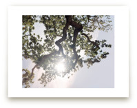 Elegant Oak Tree by Wilder California