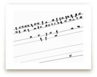 birds in the meeting 1