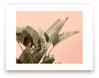Tropical Banana Leaf Pr... by Wilder California