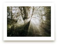 Foggy Treehouse by Katie Buckman