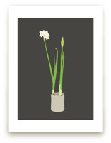 Paperwhites by Jorey Hurley
