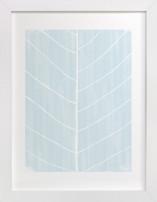 Leaf Study Limited Edition Art Print