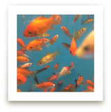 Fish Tank Photography 1 by hannahcloud DESIGN