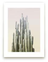 Summer Yellow Cactus by Wilder California