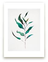 Eucalyptus Foliage by jinseikou