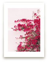 Bright Bougainvillea Art Prints