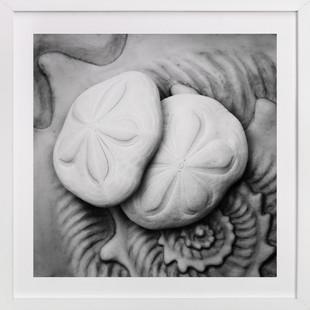 Seashell Beauty Art Print