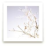 winter bask
