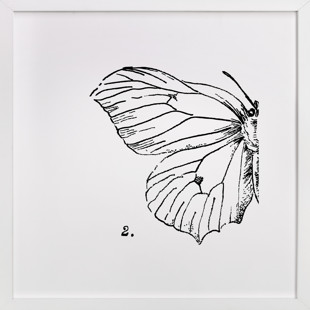 Moth No. 2 Art Print