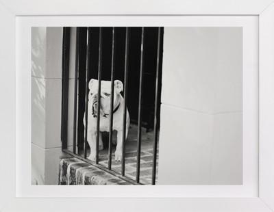 A Georgia Bulldog Art Print