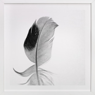 Ruffled Feather Art Print