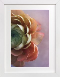 Romantic Ranunculus Art Print