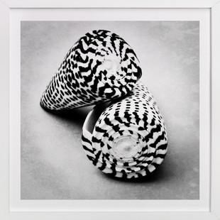 Black and White Shells Art Print