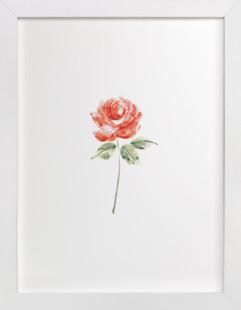 English rose Art Print