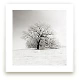 Frozen in Time by robin ott design