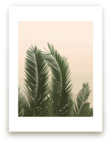 Tropical Palm Tree by Wilder California