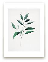 Magnolia Foliage by jinseikou