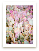 PINK CACTI by Shannon Kirsten