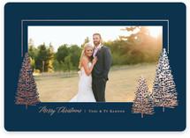 Glistening pines