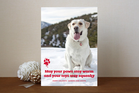 Frosty Paws Holiday Photo Cards