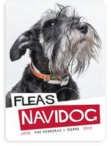 Fleas Navidog
