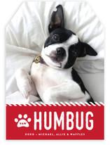 Paw Humbug