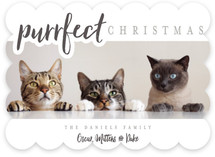 A Purrfect Christmas