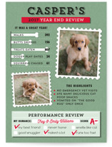 Dog's Year in Review