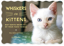Whiskers on Kittens