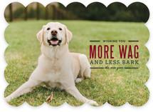 More Wag Less Bark