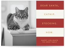 Catnip Now