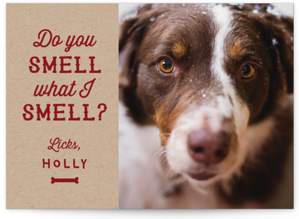 Do You Smell? Holiday Photo Cards