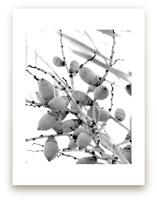 Tiny Coconuts by Jonathan Brooks