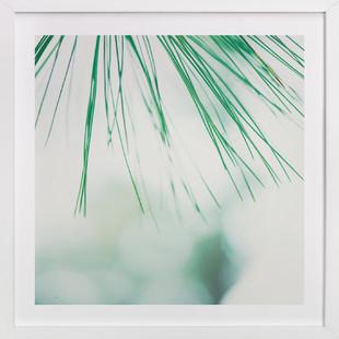 Pine Study 3  Art Print