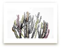 Colorful Lines Cactus
