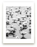 Migratory Birds Part 3 by Hello Sophie Design Lab